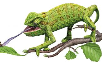 Ilustración camaleón