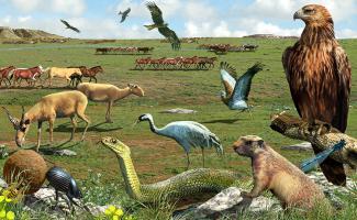 Ilustración ecosistema estepa