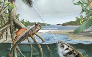 Ilustración ecosistema manglar
