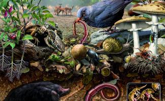 Ilustración ecosistema suelo