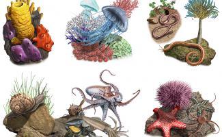 Ilustración invertebrados