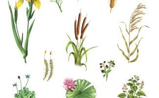 Ilustración plantas