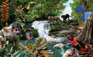 Ilustración selva