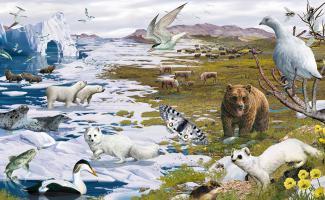 Ilustración tundra