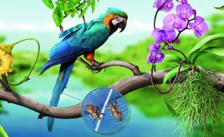Ilustración amazónico ralacciones